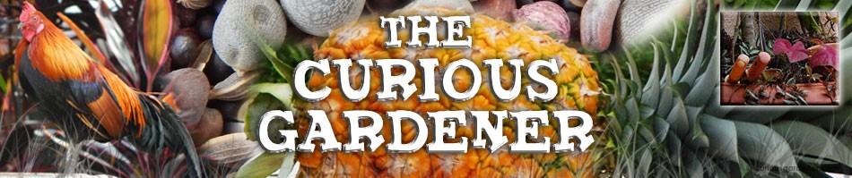 The Curious Gardener