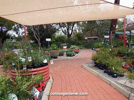 "Display of different forms of container gardening - what I consider the ""civilised"" area"