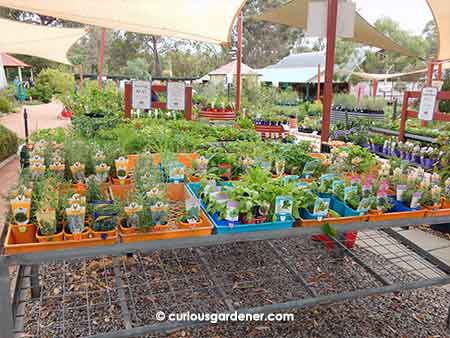Some of the herbs and veggies on sale