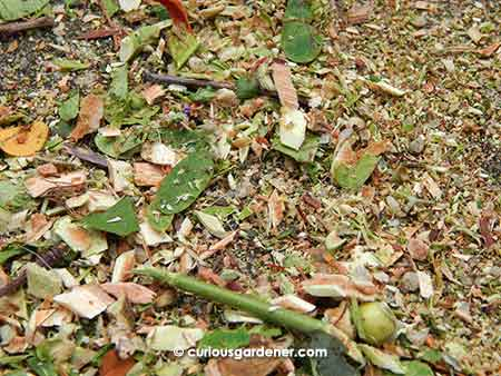 Shredded plant materials ranging from fine to small wood chips and a few thin twigs. I love it!