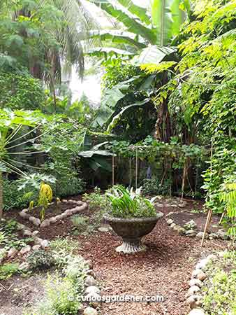 Alexius' permaculture garden is cosy and serene.