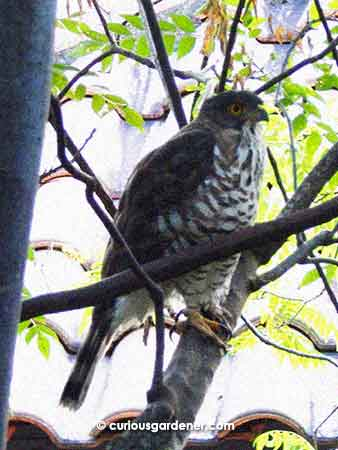 Unidentified bird of prey