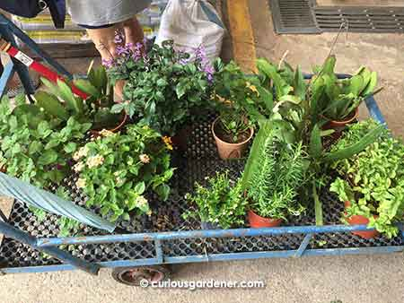 Don't forget to use the handy carts when selecting plants!