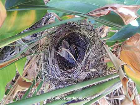 Just look at how thick the nest is!